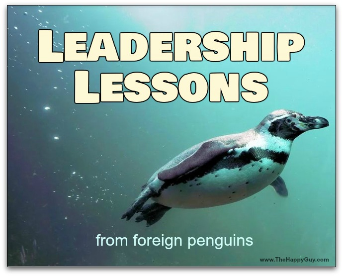 Leadership lessons form foreign penguins