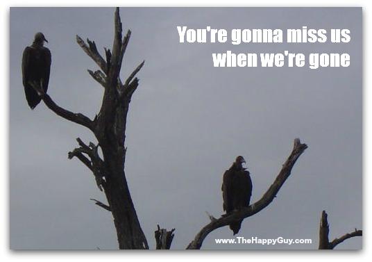 Even vultures have value